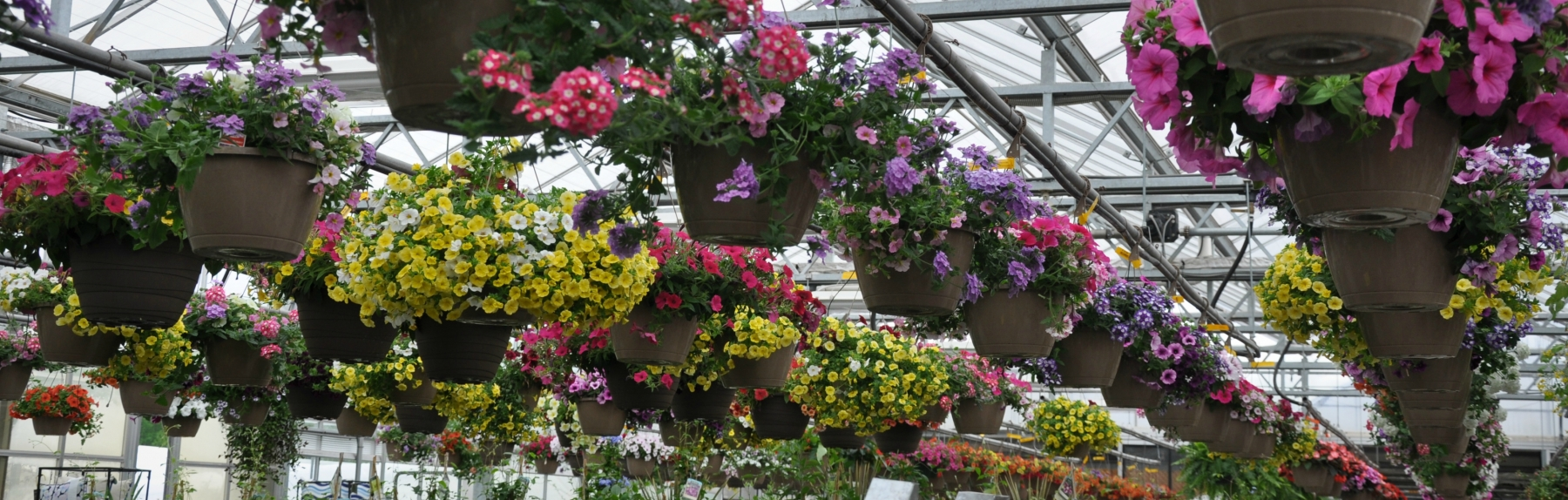 Beautiful Blooming Baskets