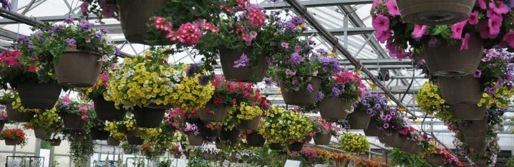 Nelson Nursery Flowers