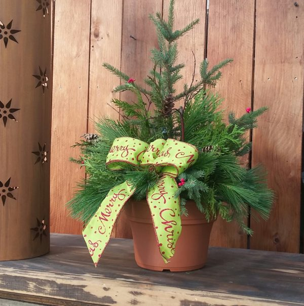 KIDS Spruce Tip Arrangement